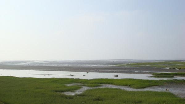 高美濕地,生態保育?